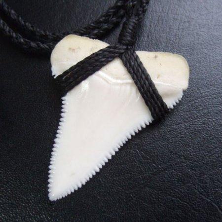 【表示現品】4.5cm 本物のホホジロザメ(ホオジロザメ) の歯ネックレス - GWN-10025