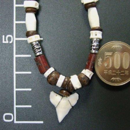 本物のサメの歯ネックレス - 20047etk