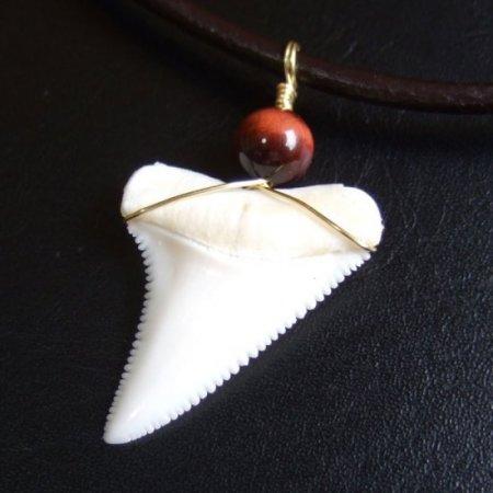 【表示現品】3.3cm 本物のホホジロザメ(ホオジロザメ) の歯ペンダント - 20856zhb