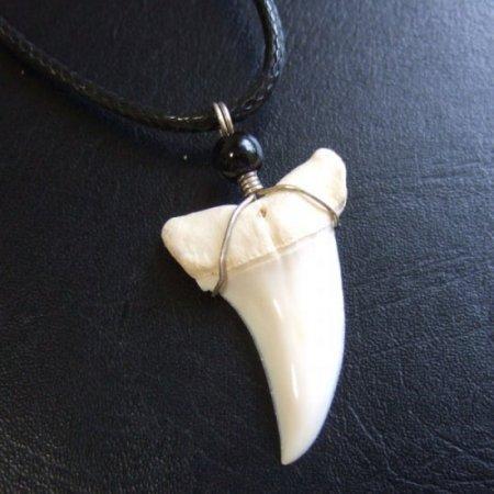 【現品】アオザメの歯(約3.8cm)ペンダント - 20974zhb